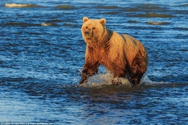 两只小熊手拉手等妈妈