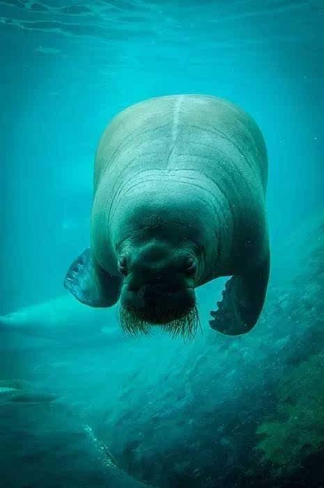 壁纸 动物 海洋动物 桌面 465_700 竖版 竖屏 手机