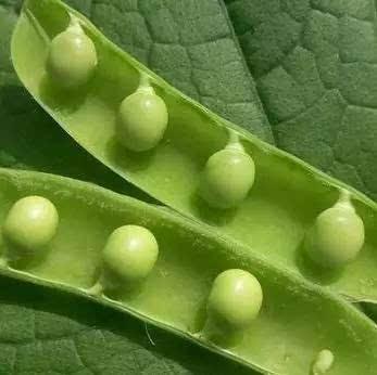 2          豆制品是优质植物蛋白质的来源,也是又便宜,又安全