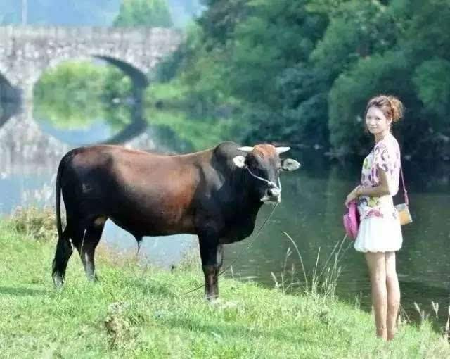 秋天农村动物马图片