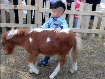 让小朋友有机会在饲养员指导下,亲手喂食小动物.