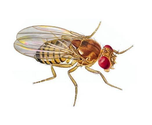 生物中常考的动物,植物,微生物,都长啥样?值得收藏!