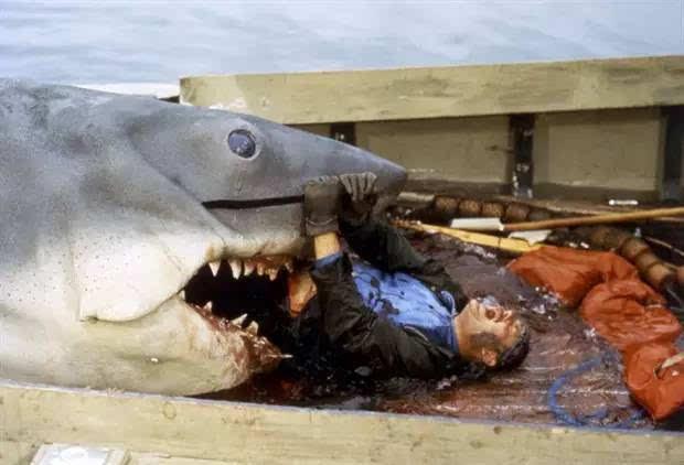 其实,比起鳄鱼,鬣狗等四足动物来,鲨鱼的咬力并不算强.