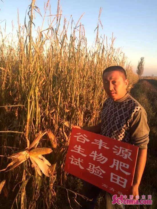 谷丰源集团回访淄博生物肥试验田和普通肥对比田,藏精阁av9cc