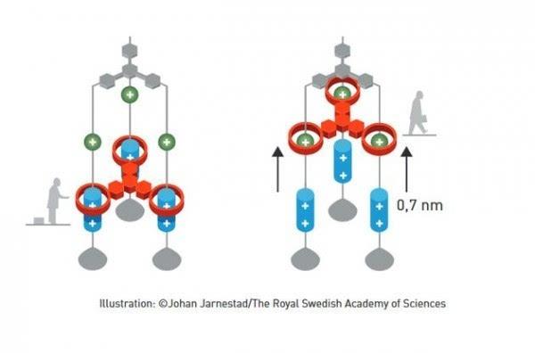 2016年诺贝尔化学奖:分子机器将在未来25-30年内出现的照片 - 5