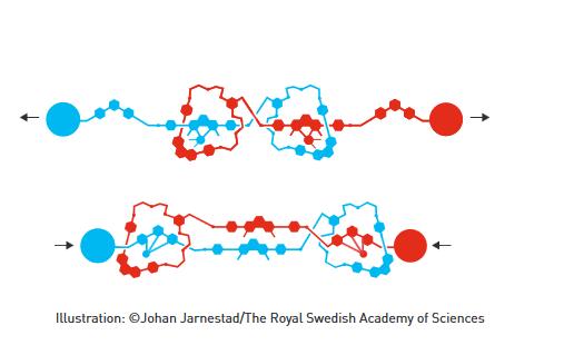 2016年诺贝尔化学奖:分子机器将在未来25-30年内出现的照片 - 6