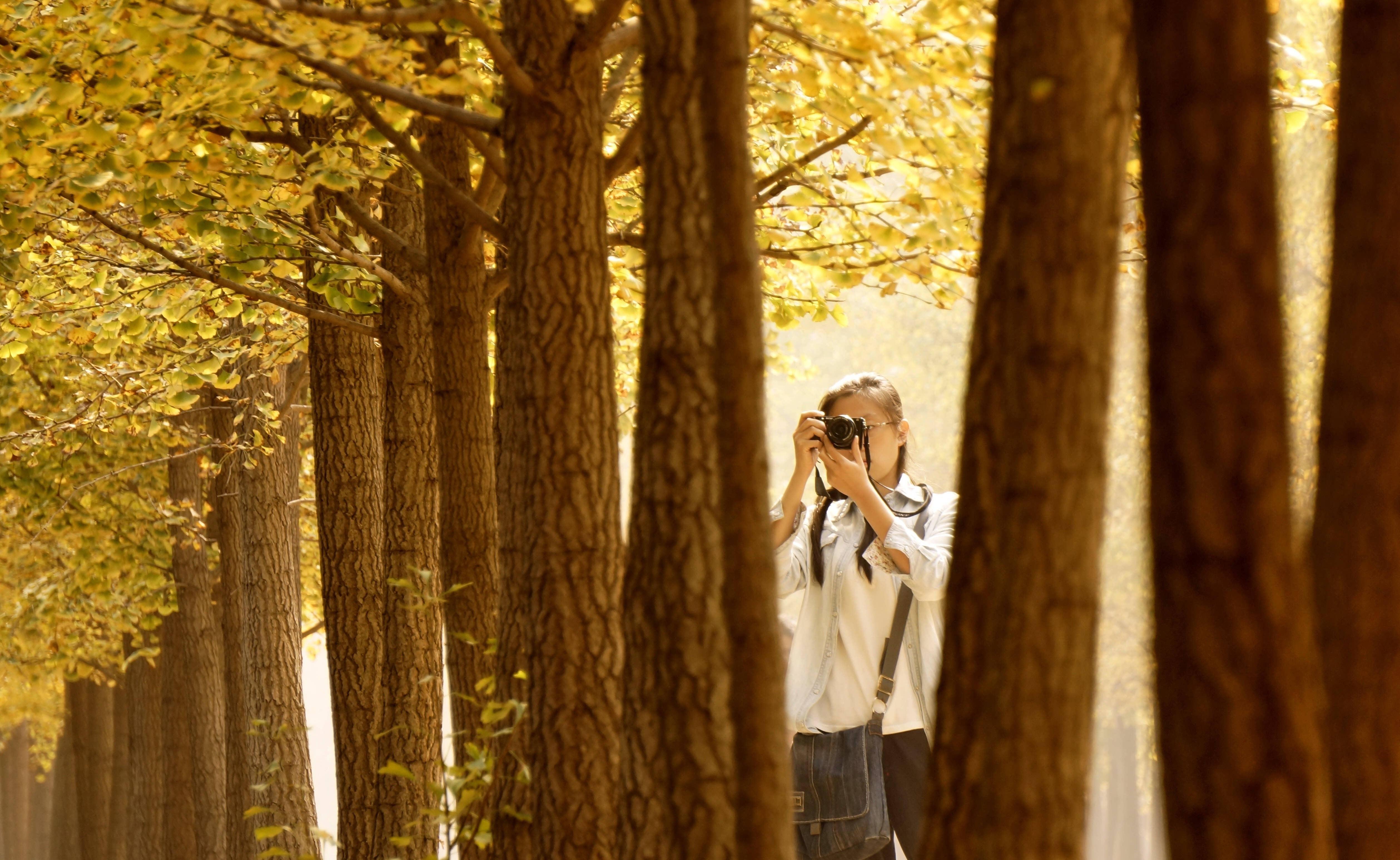 壁纸 风景 森林 桌面 5036_3095图片