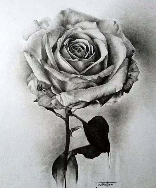 素描玫瑰花一束怎样画