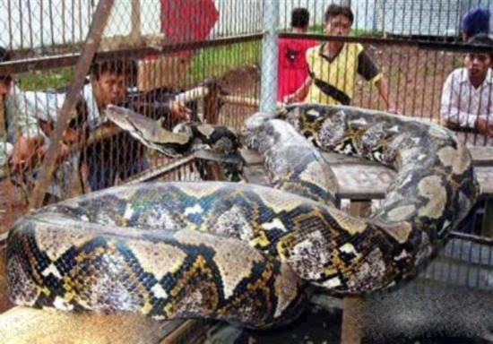 东汉古墓挖出巨蟒 千年大蛇竟是诅咒巨魔 发现者当场吓死