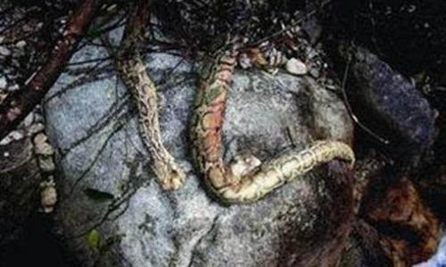 千年巨蛇镇守古墓竟借尸还魂(图)