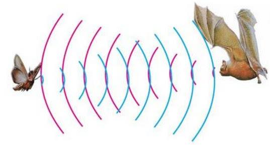 """语音识别新方向:仿生蝙蝠耳能用声纳精准""""聆听"""""""