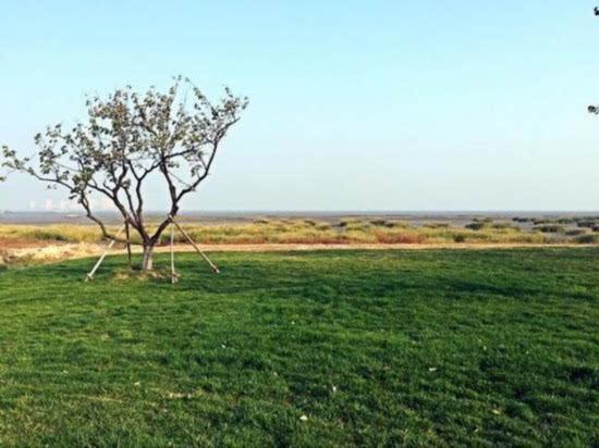 青岛将建10个湿地公园修多条滨海滨河环山绿道