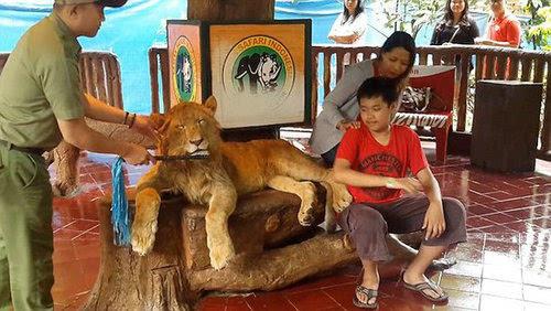 游客用食物砸醒熊猫宝宝 看动物园那些事儿