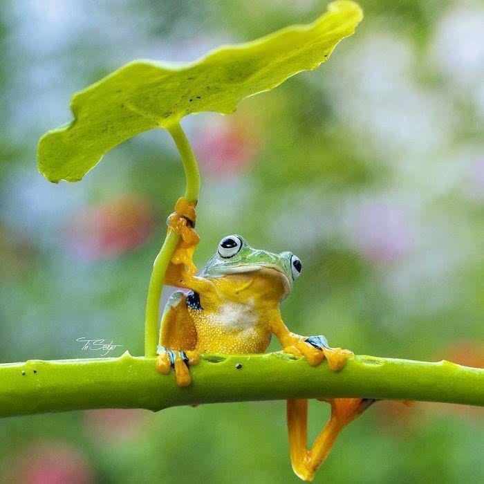奇的微小动物瞬间