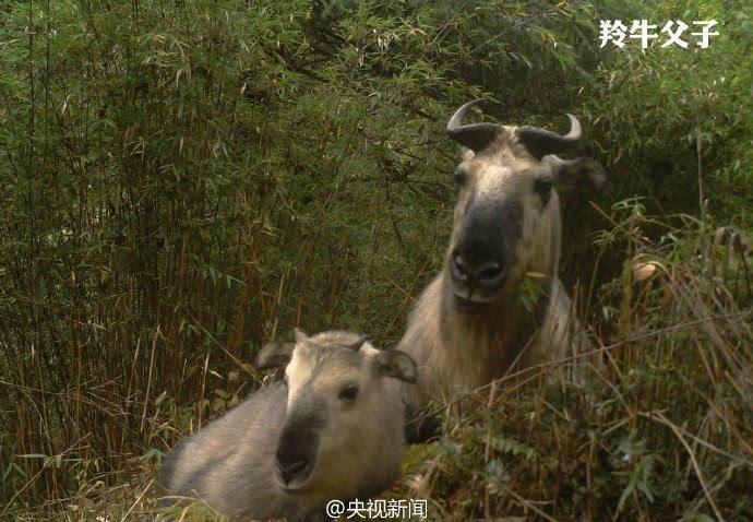 """自然保护区红外相机前 动物纷纷""""自拍""""成网红"""