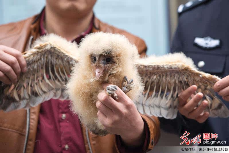 广西野生保护动物