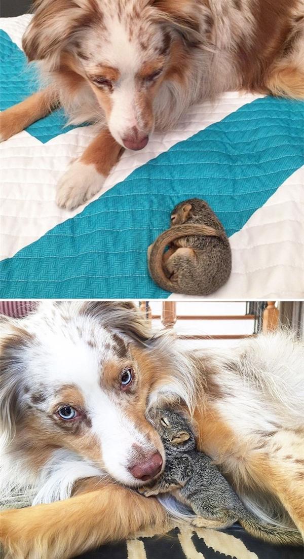 动物们彼此相伴到老照片