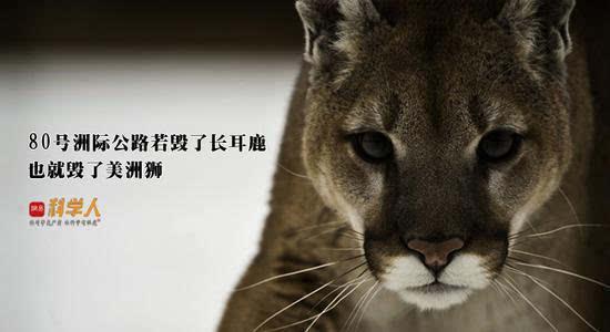 """美帝版""""青藏铁路野生动物通道""""与中国有什么不同"""