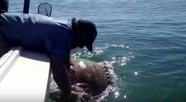 小伙垂钓被大鱼拖坠海 海中挣扎6小时后终于获救生还