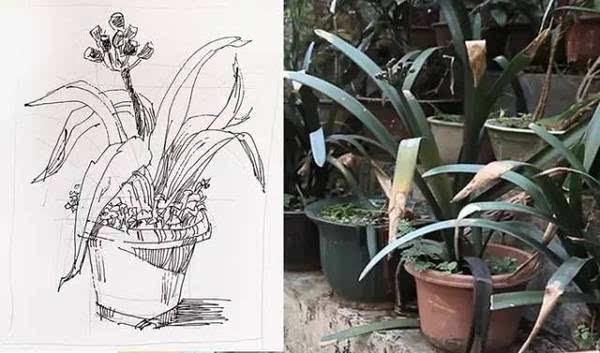 装饰植物手绘构图