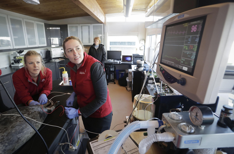 温哥华新海洋动物医院正式启用