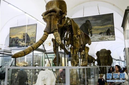 探访圣彼得堡动物博物馆(高清组图)