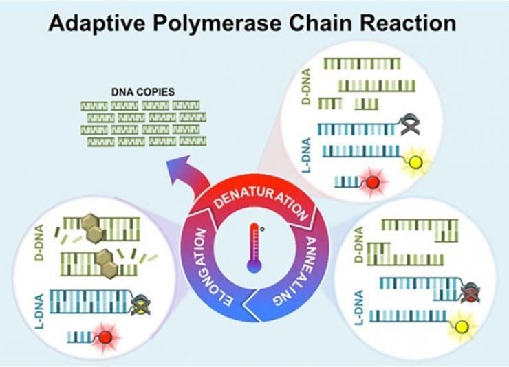 下图即是适应性pcr的过程图解: pcr扩增反应是一个不稳定的反应过程