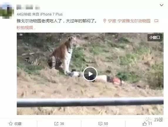 微博写着,雅戈尔动物园老虎山中有一男子,隔着河岸可以看到老虎