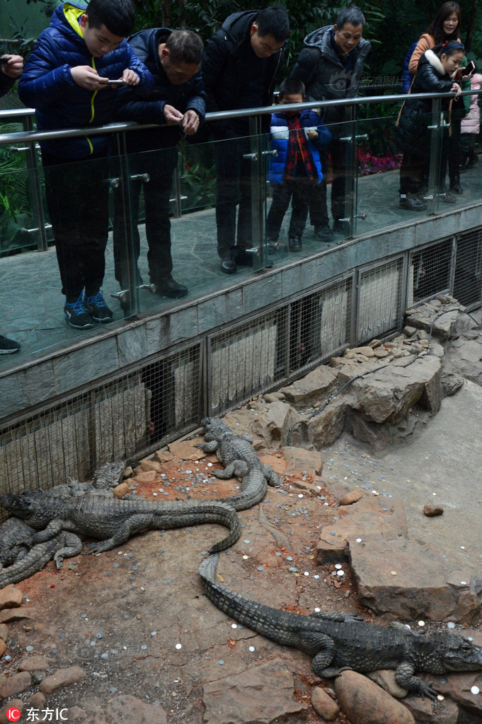 上海动物园鳄鱼池变许愿池