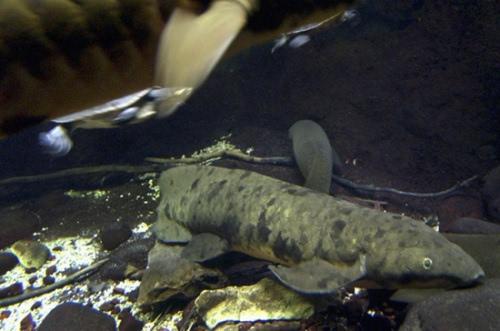 """世界最长寿鱼离世 活到90多岁被称""""老爷爷""""(图)"""
