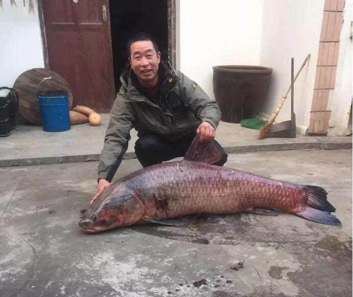 幸运!男子钓到百斤巨无霸大鱼(图)