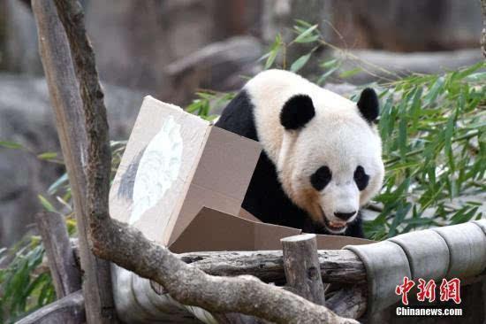 美国最大旅游展开幕大熊猫、兵马俑成亮点