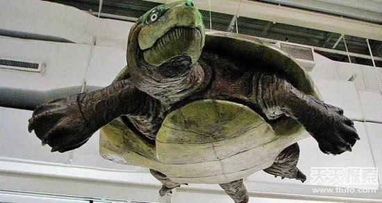 揭秘史前恐怖动物:魔鬼蛙竟能吃恐龙