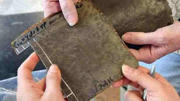 厉害!科学家发现制作轮胎新材料:番茄皮和鸡蛋壳
