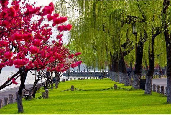 杭州西湖山明水秀,人文景观比比皆是,同时又是一个风姿多彩的花卉世界。古人道:前人种树,后人纳凉。在杭州西湖可以说;前人种花,后人赏花。三底月至六月初西湖边赏桃花,间株杨柳间株桃是西湖春天景致的最佳写照,犹以白堤和苏堤景色最佳。西湖的春天,处处桃柳争艳。 杭州西湖早在唐代就已广栽桃树,如今的西湖苏堤、白堤上,一株杨柳一株桃,花开时翠彩相间,千姿百态。漫步湖岸,极为赏心悦目。西湖的桃花广植在苏堤、白堤、柳浪闻莺,孤山北麓和曲院风荷至镜湖厅的沿湖堤段,其中最引人注目的就是白堤和苏堤了。每当桃花盛开时,两