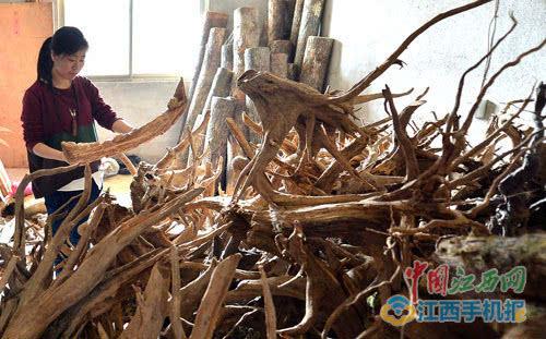 李英捧着一块初步处理过的树根构思.