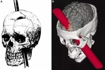 大脑中负责记忆功能的结构叫海马,而相当于电脑内存的结构就是大脑的