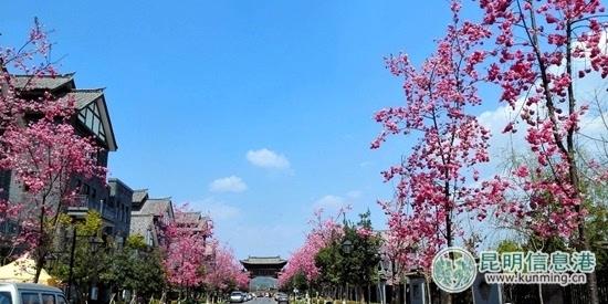 """富民�h�浜们迕餍¢L假""""旅游大餐"""""""