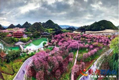 兴义贵州醇风景区樱花盛开好唯美.俞兴荣 摄
