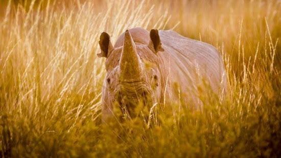 """卢卡斯拍摄非洲野生动物,凭借""""侧影""""系列作品获得索尼世界摄影大赛"""