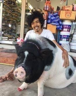 把母猪当女友 人猪情深 秀恩爱界的一股清流