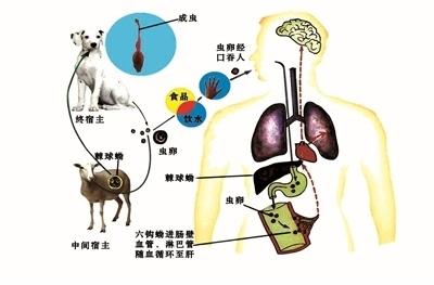 防治包虫病科普知识