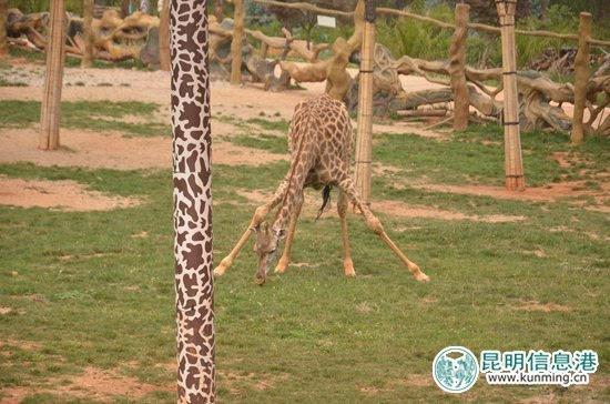 野生动物园活动不断 六一全家出游儿童免门票