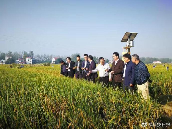 亩产1365公斤! 袁隆平团队双季稻产量再创新高