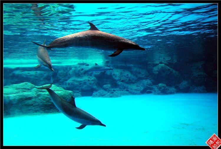 壁纸 动物 海底 海底世界 海洋馆 水族馆 鱼 鱼类 750_506
