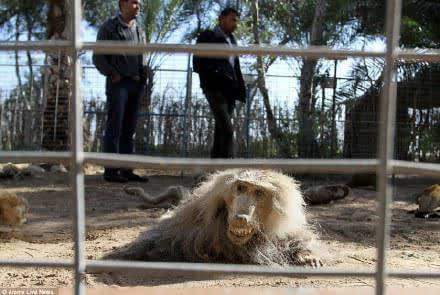 巴以冲突 可怜了动物园内的小动物