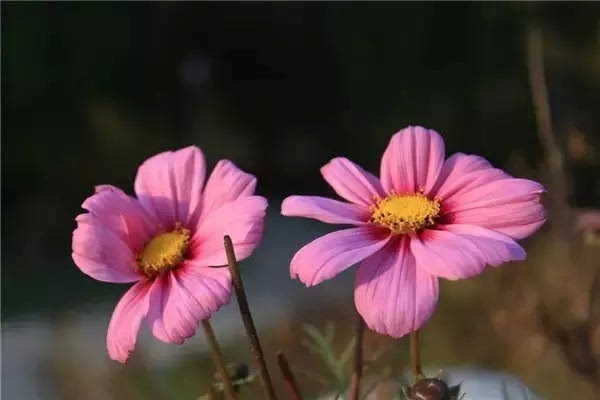 Rose【(太美了...)送给珍惜我的朋友!】(5600) - Rose - Rose Yang的博客