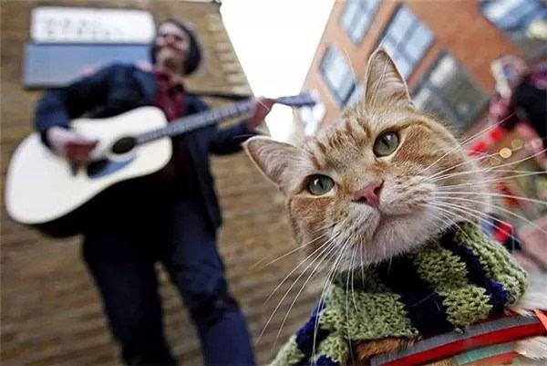 伦敦街头一只猫的故事,震惊了全世界! - dss.2005 - dss.2005 欢迎您