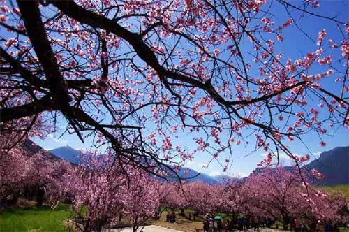 (原创)赏春: - liangshange - 一线天