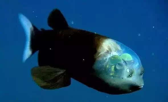鲜为人知的13种海洋动物